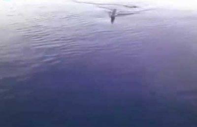 squalo agrigento