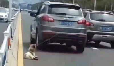 trascina cane