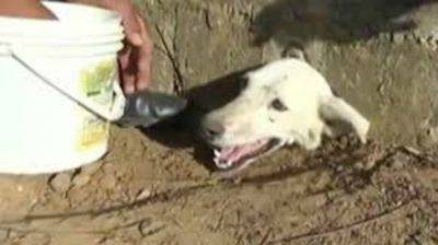 Peru-dog-head-stuck-in-hole