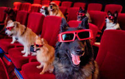 cani-teatro