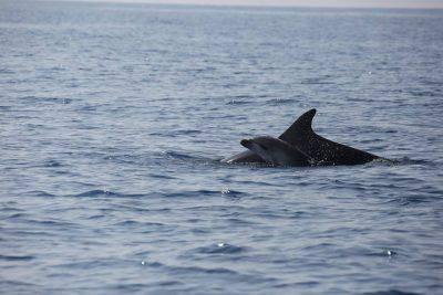@Facebook/Oceanomare Delphis Onlus