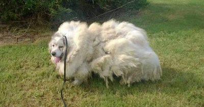 lazarus-cane