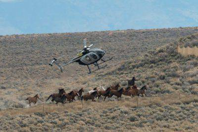 @Facebook/American Wild Horse Preservation Campaign