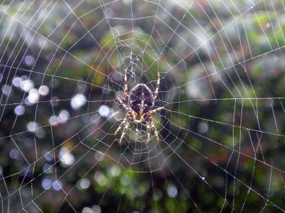 ragno-ragnatela