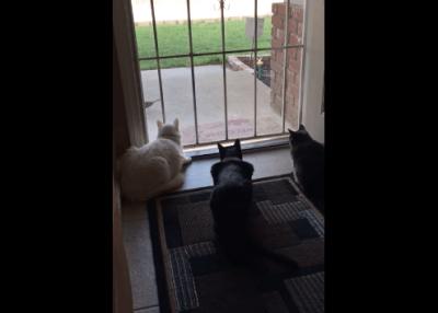 tre-gatti