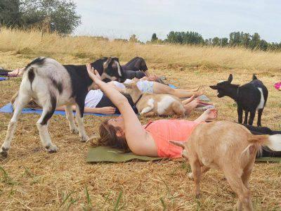 yoga-capre