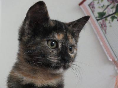 felv leucemia felina