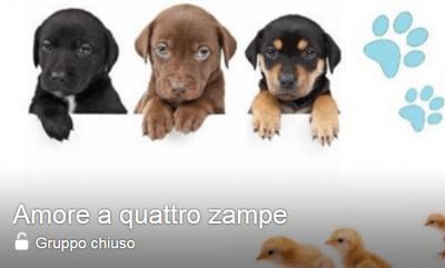 @Facebook/Amoreaquattrozampe