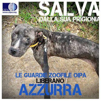 @Facebook/OipaPalermo