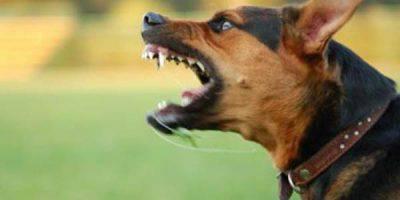 cane-aggressivo