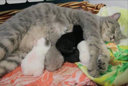 gatta-allattamento