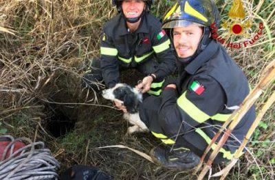 pompieri-cane-salvataggio