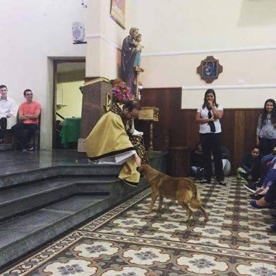ruivo-cane-brasile