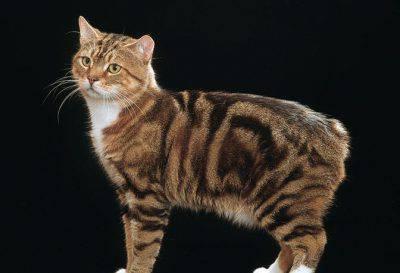 Il gatto Puh ©Getty