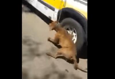 cane-trascinato
