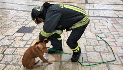 Il cane Ciccio - FOTO: Facebook