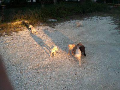 cuccioli-pelosi-nel-cuore