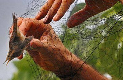 rete-cattura-uccelli