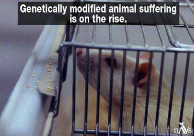 @Facebook/National Anti Vivisection Society