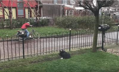 cane-giardino