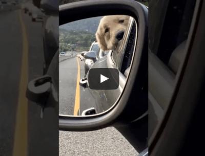cane-traffico