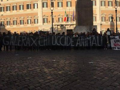 Reati contro gli animali manifestazione nazionale in for Piazza montecitorio 12