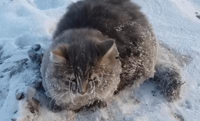 gatto-congelato