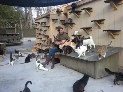 @Facebook/Happy Cat Sanctuary