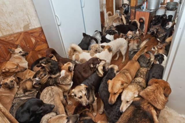 accumulatori seriali animali cattivo odore