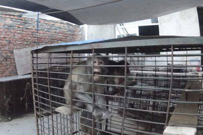 Scimmie in gabbia