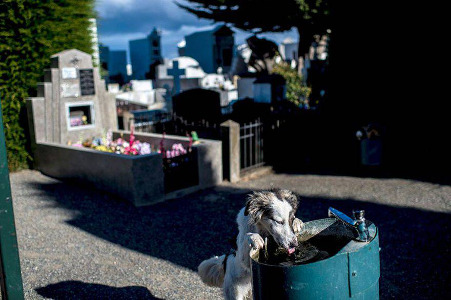 Cane al cimitero ©Getty