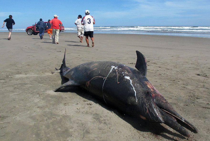 Delfino morto in spiaggia ©Getty