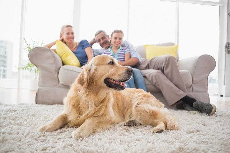 cane in appartamento