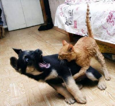 Cani E Gatti Quattrozampe Prova A Rovinare Il Riposo Del Micione