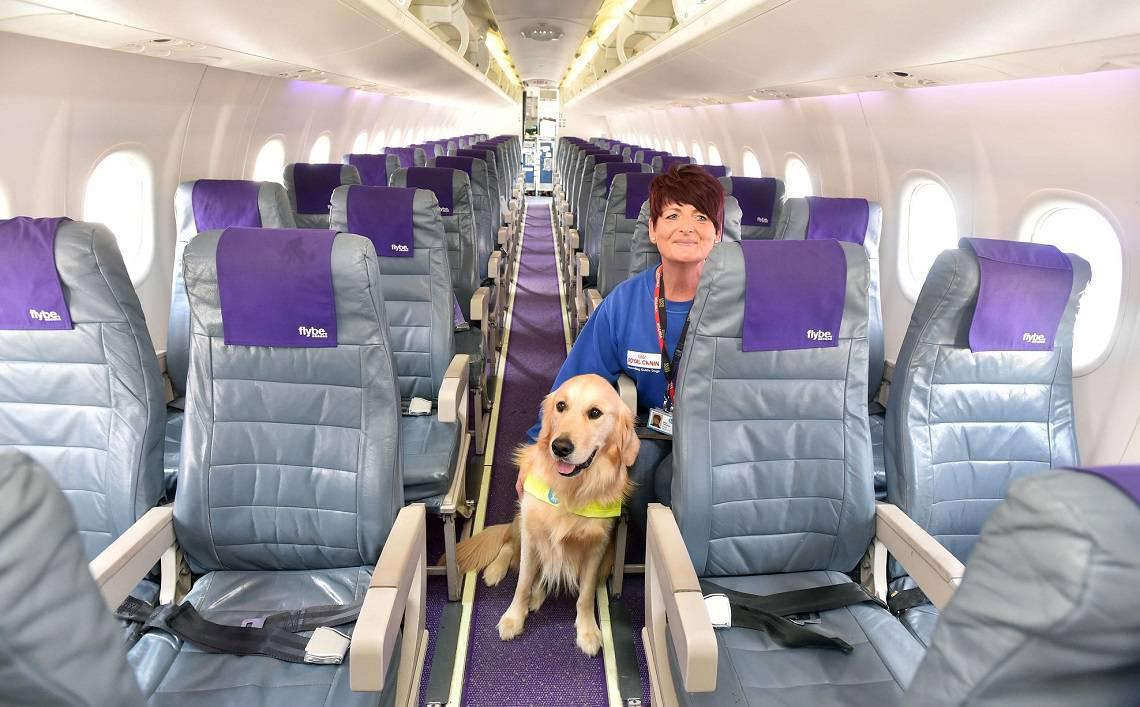 Durante le vacanze come viaggia il nostro animale elenco for Delta airlines dogs in cabin