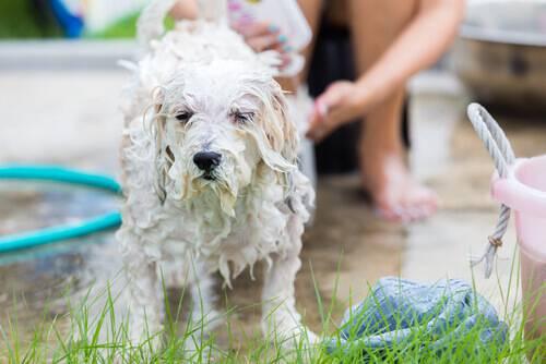 Come lavare il cane in casa