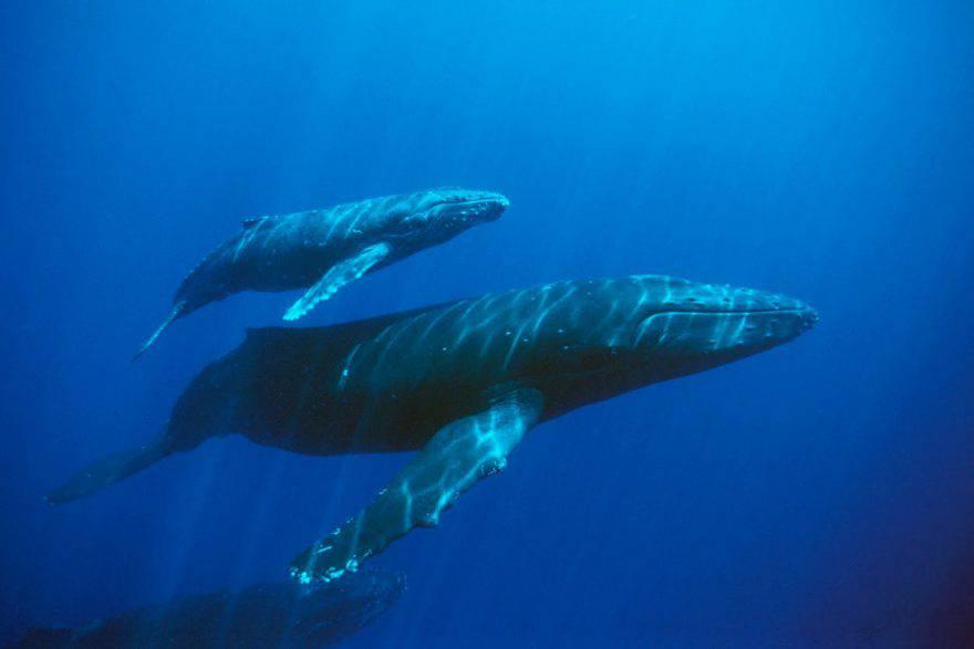 balene reti