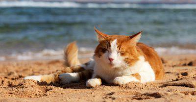 gatto caldo