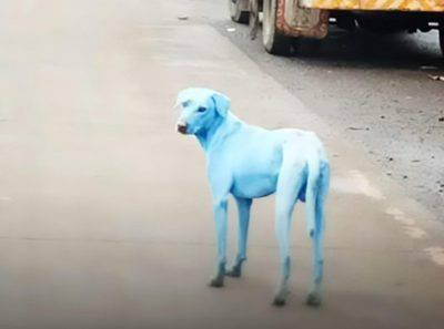 Mumbai, cani azzurri dopo il bagno nel fiume inquinato