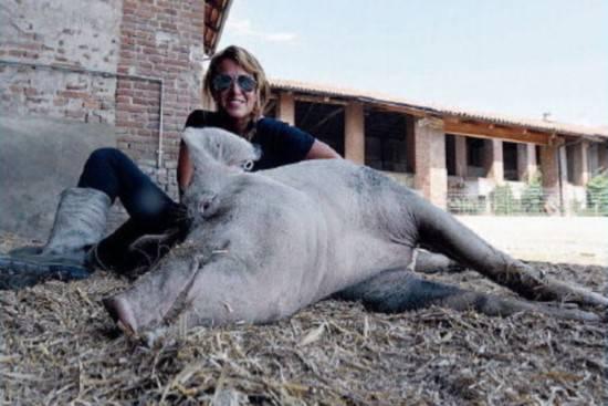 39 la piccola fattoria degli animali 39 dove i maiali for Piccola fattoria moderna
