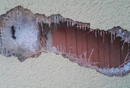 un picchio sta distruggendo la mia casa e nessuno pu