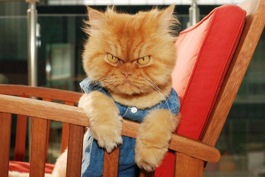 aggressività gatto