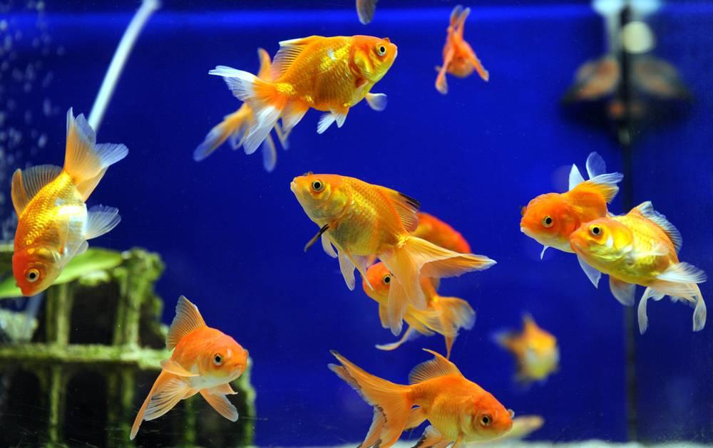 pesci inseguono fame