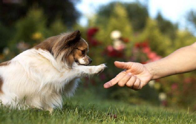 comunicazione cane
