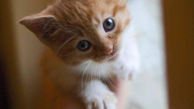 vita ed età del gatto