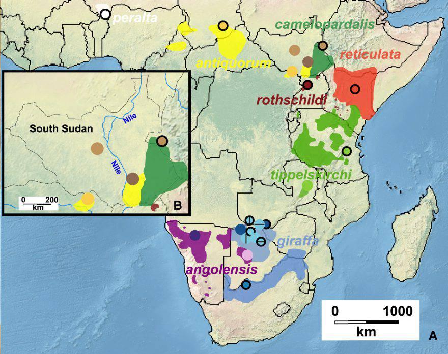 cartina giraffe africa