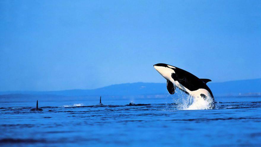 orche menopausa