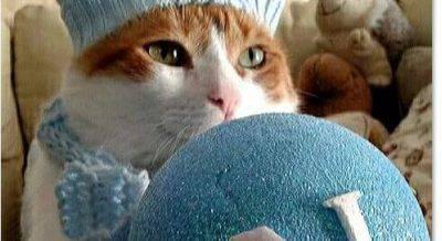 eduard gatto tifoso