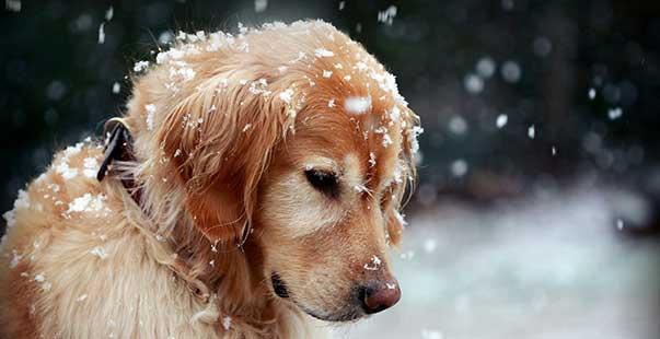 proteggere cane dal freddo
