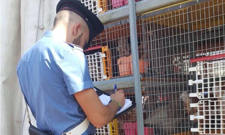 sequestro di animali